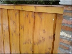Fence elements  from planks with bord