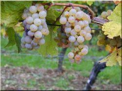 Vine posts and tutors