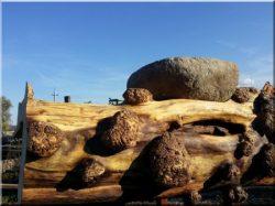Möbel aus Naturholz