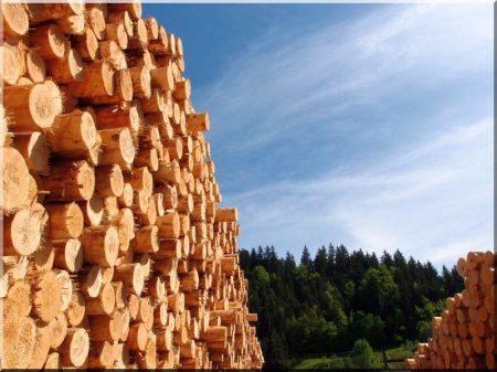 Bark Pine Column, Thin