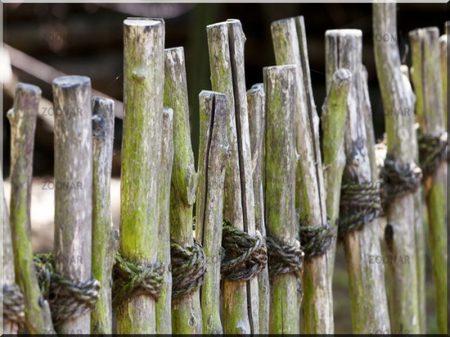 Branche clôture, zulu, 3 - 5 cm