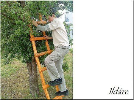 Locust log ladder