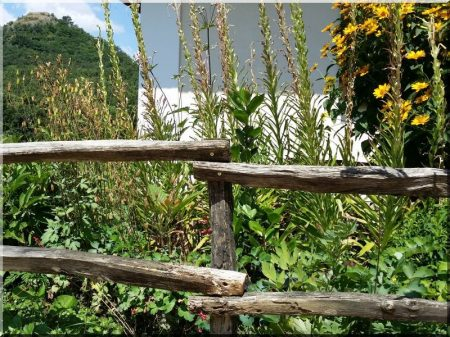 Barked acacia column, 7 - 9 cm