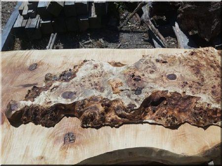 Plateau de table (bois de peuplier)