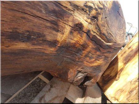 Tölgyfa rönk