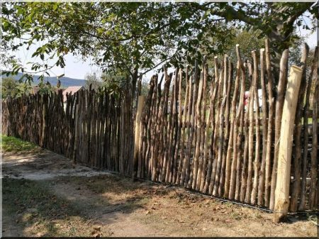 6 8 Cm In Diameter Naturally Increased Curved Fence