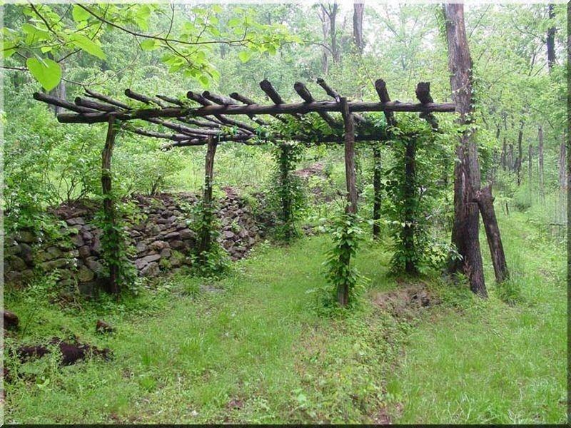 Pergola pergola bau rustikale schattenspender im garten - Gartenhaus kiwi ...
