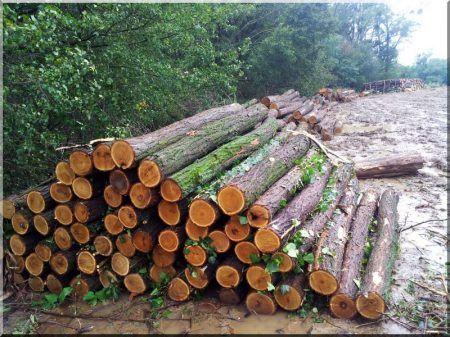 Oszlopok erdőn