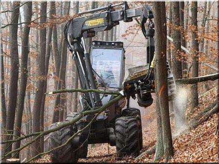 Forstbewirtschaftung
