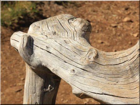 Root, driftwood