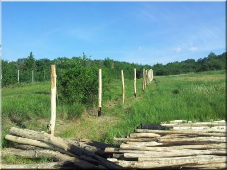 Debarked acacia pole, diam. 10-14 cm