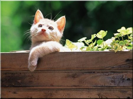 Big flower box made of beech trees