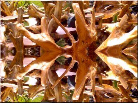 Polished branchwood
