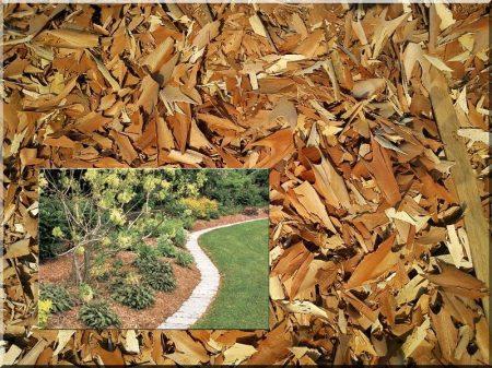 Etched locust mulch