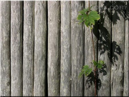 Round timber for favorable price