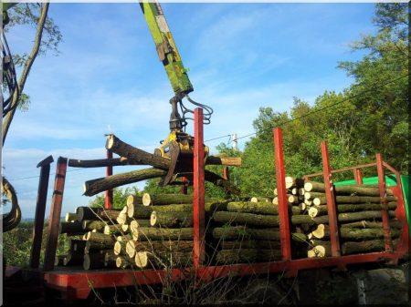 Holzstämme laden
