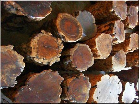 Poteaux en bois poli