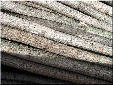 Acacia stake, 1,8 m long, natural