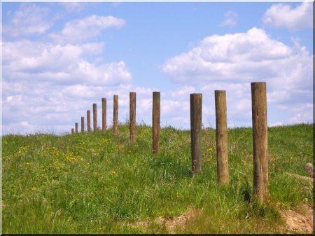 Locust vineyard post, debarked,thick