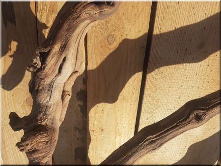 Cleaned vine