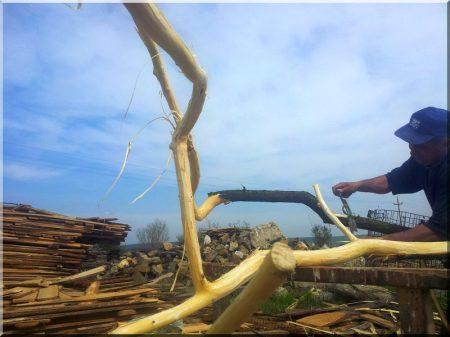 Fork wood, acacia, barked