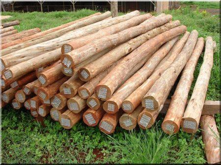 Écorce acacia colonne
