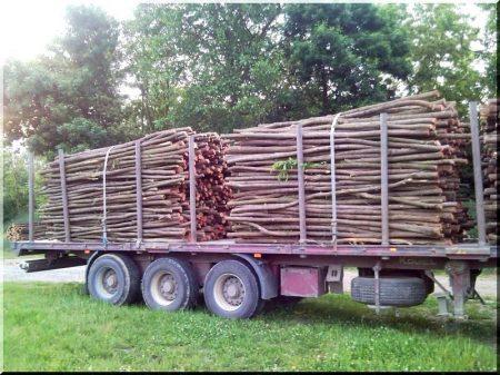 Acacia poles, 3 metres