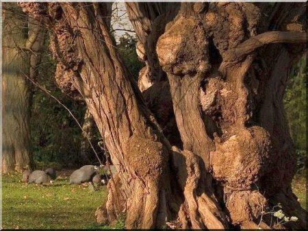 Acacia wood garden well