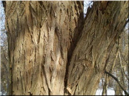 Locust bark mulch