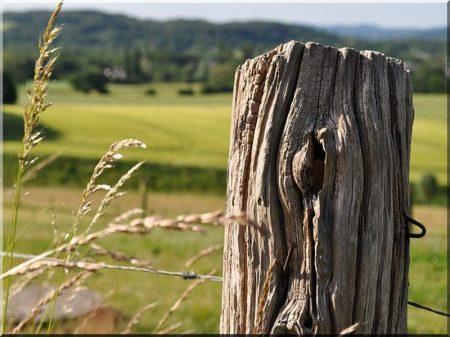 Wild fence post
