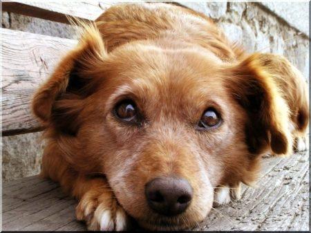 Pine panelling dog-kennel, size III