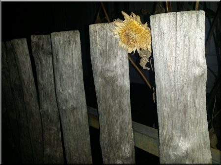 Rustic acacia fence from halved poles