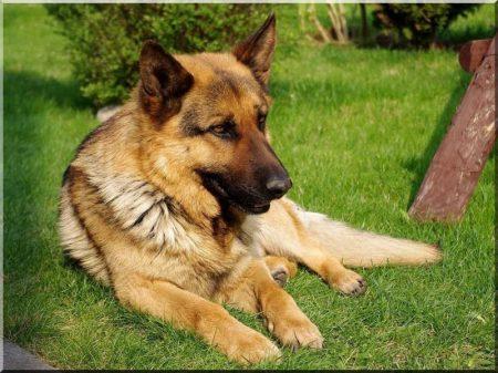 Hundehütte aus Rundholz, Größe III