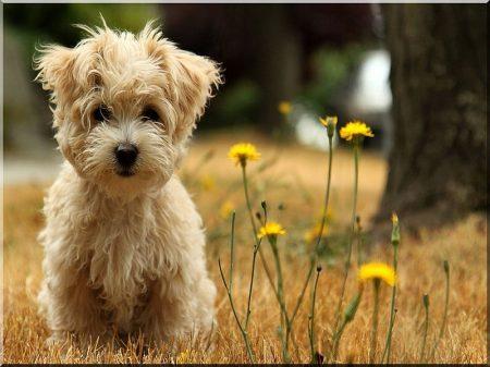 Kutyaház -