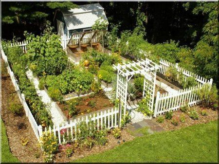 Eichenlatten für Zaunbau, 72 cm lang