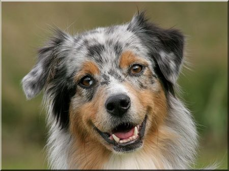 Hundehütte aus Robinie, gepolstert, Größe IV