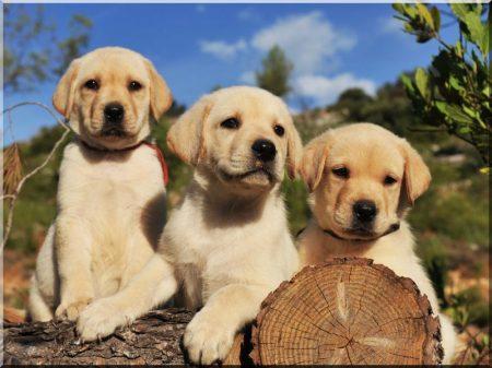 Pine panelling dog-kennel size I