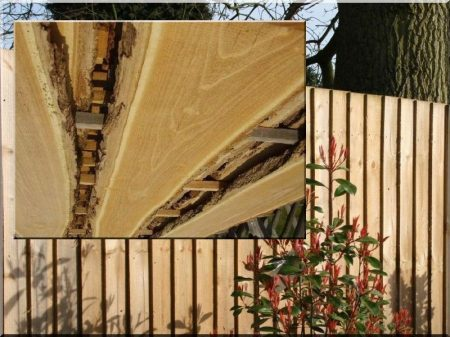 Wide acacia plank for fence building