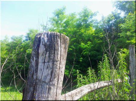 Holzpfähle aus Robinie, oben angeschrägt, Durchmesser 6 - 8 cm