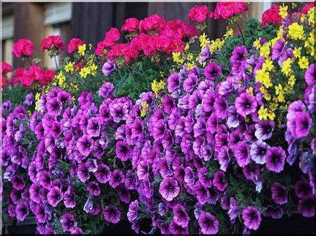 Oak balcony flower box
