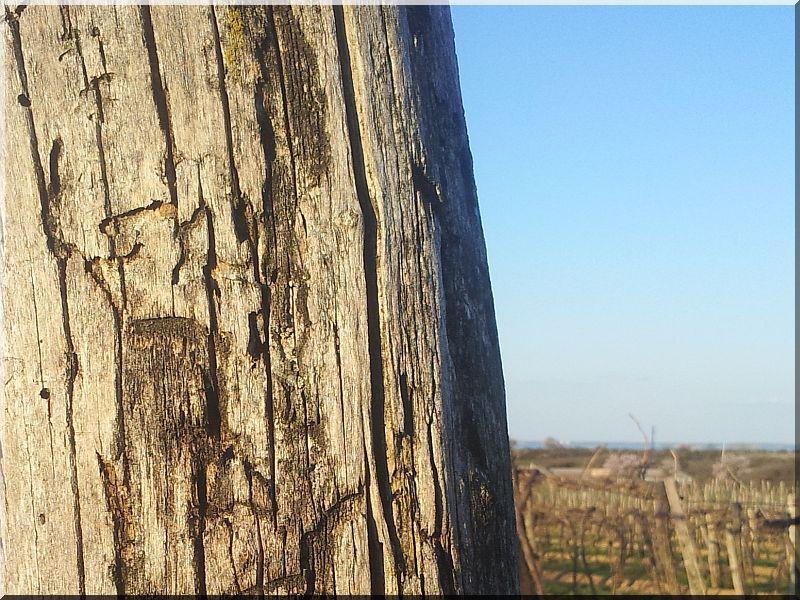 Antik faanyagok felülete, kattint >>> nagyobb kép