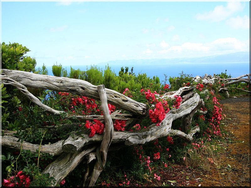Rusztikus akácfa kerítés