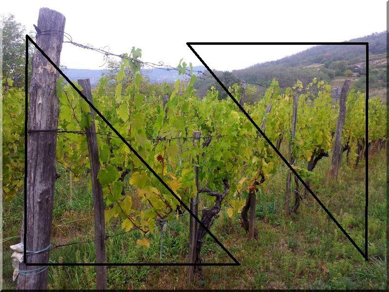 Akác szőlőkaró, 2 méteres, 5 × 5 cm, háromszög alakú