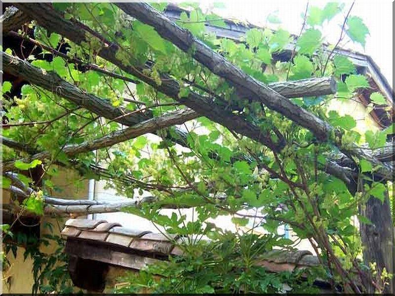 Virágrács, apácarács, pergola. Kertünk legintimebb része a lugas, természetes, növényekkel árnyékolt terület, ahol védelmet találhatunk nyáron az intenzív napsütés ellen. A futónövényeknek, legtöbb esetben szőlőnek, borostyánnak, rózsának szükséges támasz megépítéséhez kínálunk oldalunkon alapanyagokat!
