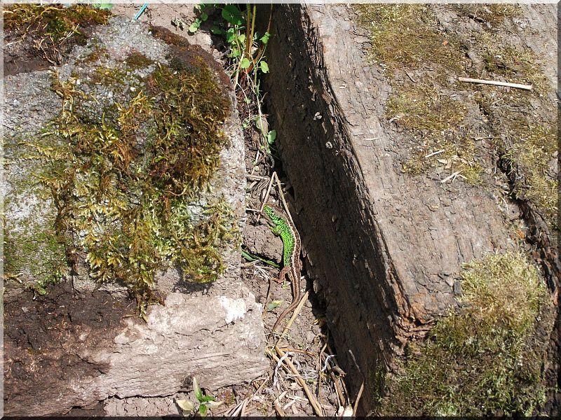 Fa kerti lépcső bontott vasúti talpfákból