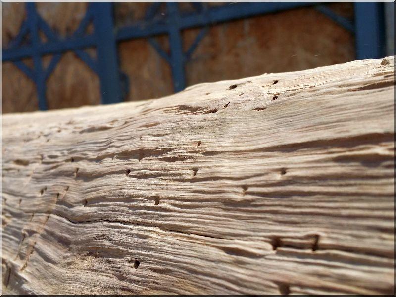 Rohholz, Stamm Möbel, Astmöbel