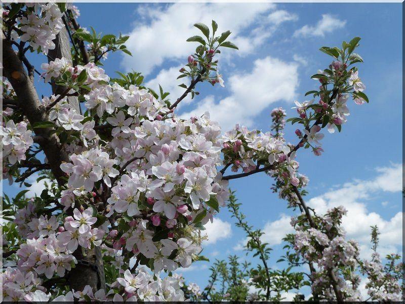 Rusztikus akác virágláda, 45 x 45 x 45 cm -