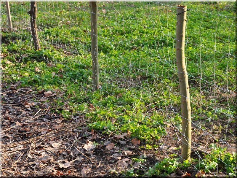 Kerítésoszlopok