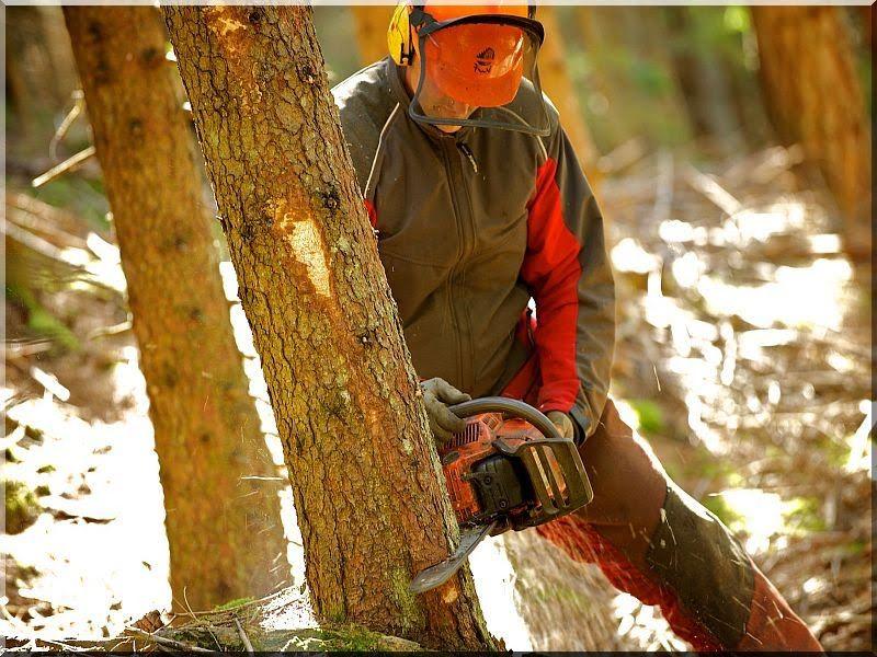 Erdő kitermelés