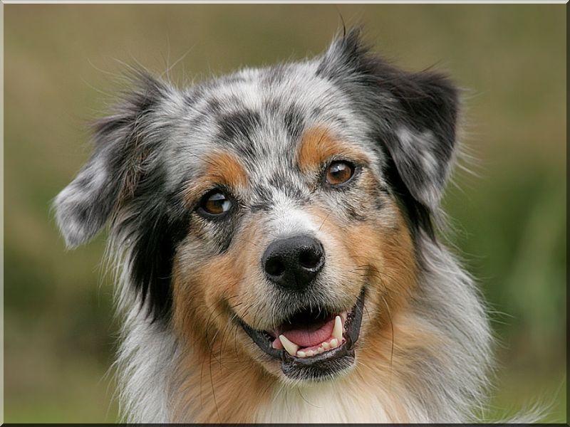 Kutyaól, deszka, I- es méret -
